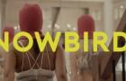 Harvey Stripes- Snowbirds