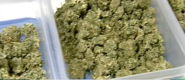 canada-weed